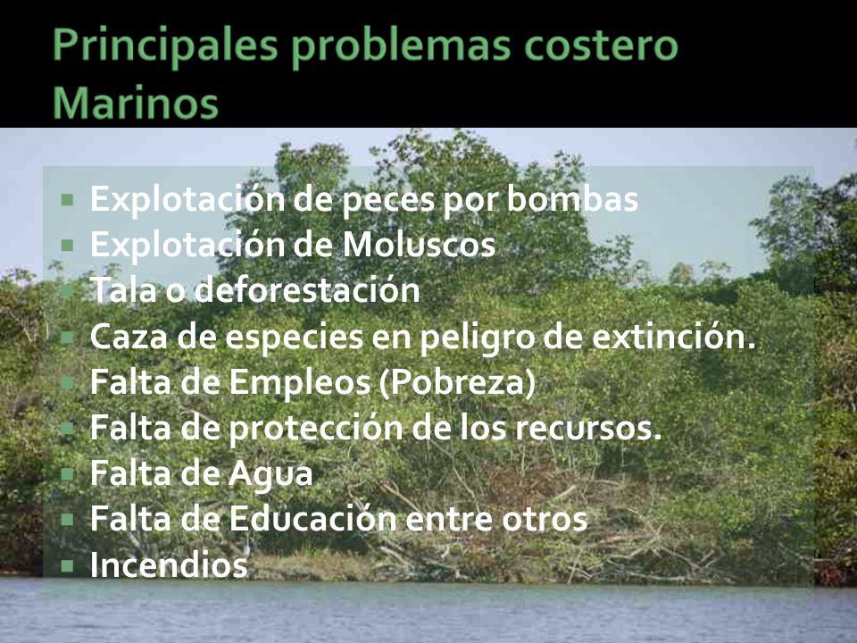  Explotación de peces por bombas  Explotación de Moluscos  Tala o deforestación  Caza de especies en peligro de extinción.