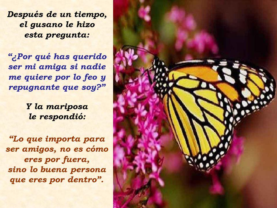 Un día, una mariposa se puso a descansar en la rama donde estaba él. Este se acercó hacia ella y comenzaron a hablar. Al final, se hicieron muy amigos