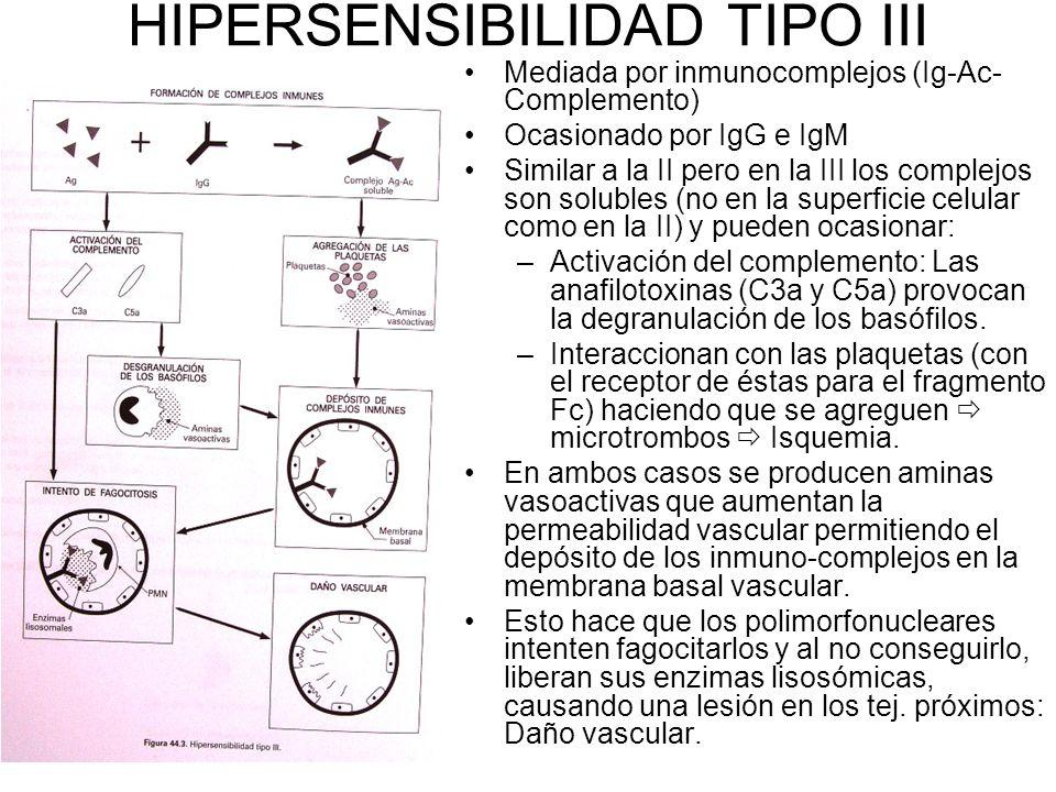 HIPERSENSIBILIDAD TIPO III Mediada por inmunocomplejos (Ig-Ac- Complemento) Ocasionado por IgG e IgM Similar a la II pero en la III los complejos son solubles (no en la superficie celular como en la II) y pueden ocasionar: –Activación del complemento: Las anafilotoxinas (C3a y C5a) provocan la degranulación de los basófilos.