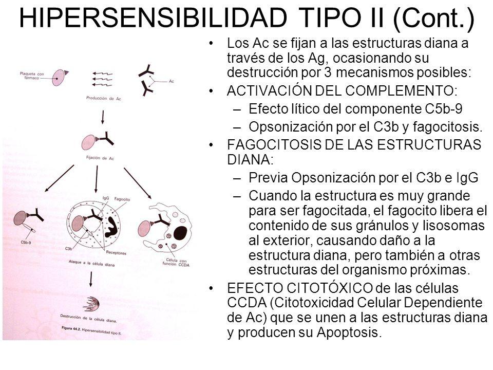 HIPERSENSIBILIDAD TIPO II (Cont.) Los Ac se fijan a las estructuras diana a través de los Ag, ocasionando su destrucción por 3 mecanismos posibles: ACTIVACIÓN DEL COMPLEMENTO: –Efecto lítico del componente C5b-9 –Opsonización por el C3b y fagocitosis.