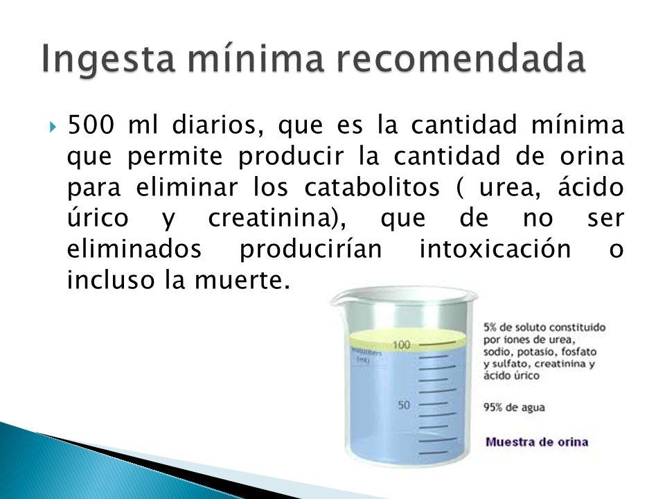  500 ml diarios, que es la cantidad mínima que permite producir la cantidad de orina para eliminar los catabolitos ( urea, ácido úrico y creatinina), que de no ser eliminados producirían intoxicación o incluso la muerte.