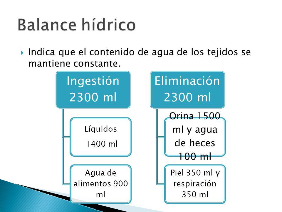  Indica que el contenido de agua de los tejidos se mantiene constante.