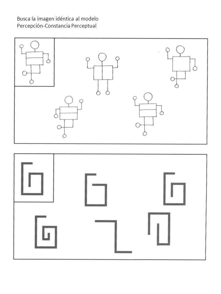 Busca la imagen idéntica al modelo Percepción-Constancia Perceptual