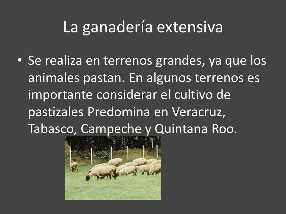 La ganadería extensiva Se realiza en terrenos grandes, ya que los animales pastan.