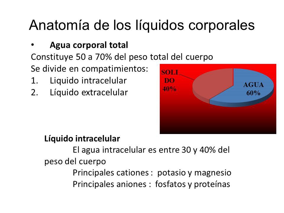 Contenido Tématico Anatomía de los líquidos corporales Intercambio normal de líquidos y electrolitos Clasificación de las alteraciones de los líquidos corporales.