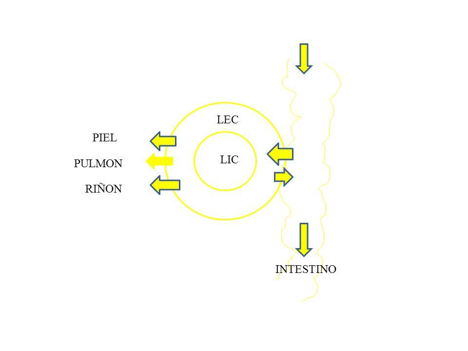 Presión oncótica Presión osmotica ejercida por las proteínas Presión hidrostatica Presión oncotica Importante para intercambio de liquidos entre plasma y intersticio Arterial = hidrostatico > oncótico Venoso = oncotico > hidrostático Si no esta equilibrado  Edemas