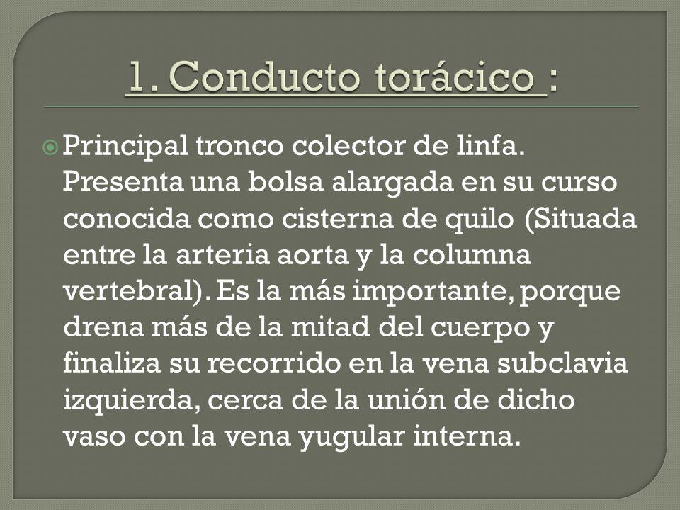 Universidad de Ciencias Medicas. Manuel Soto Gamboa. - ppt descargar