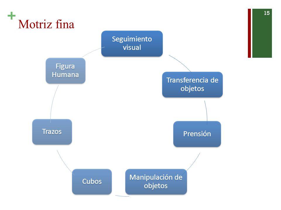 + Motriz fina 15 Seguimiento visual Transferencia de objetos Prensión Manipulación de objetos CubosTrazos Figura Humana