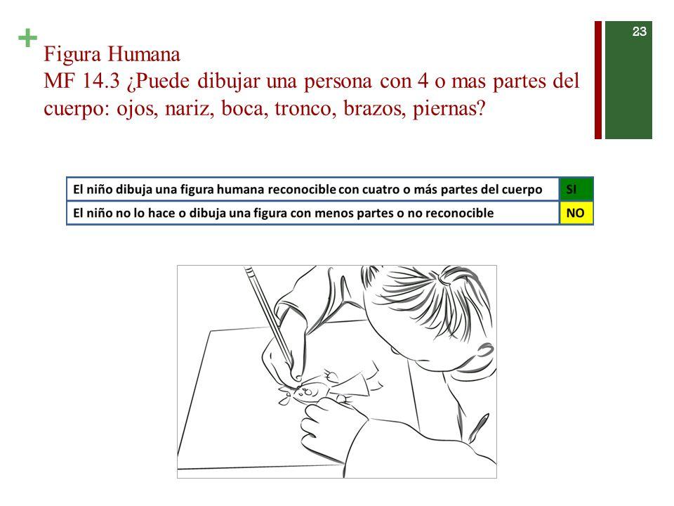 + Figura Humana MF 14.3 ¿Puede dibujar una persona con 4 o mas partes del cuerpo: ojos, nariz, boca, tronco, brazos, piernas.
