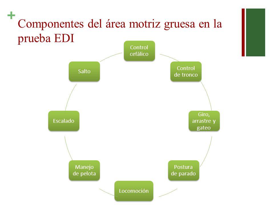 + Componentes del área motriz gruesa en la prueba EDI Control cefálico Control de tronco Giro, arrastre y gateo Postura de parado Locomoción Manejo de pelota EscaladoSalto