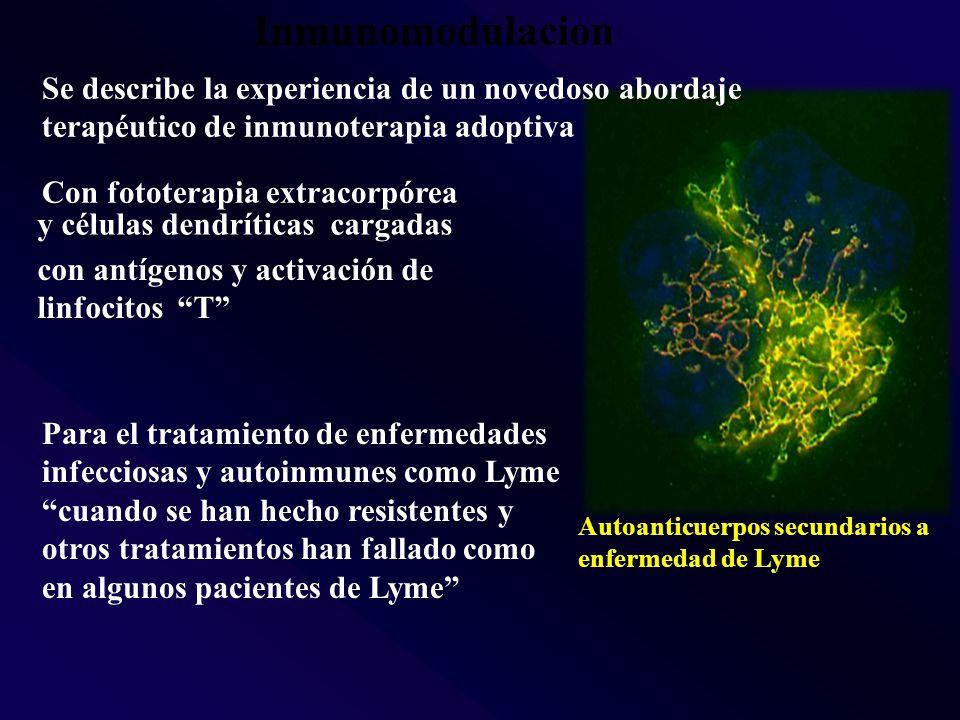 Inmunomodulacion Autoanticuerpos secundarios a enfermedad de Lyme Con fototerapia extracorpórea Se describe la experiencia de un novedoso abordaje terapéutico de inmunoterapia adoptiva y células dendríticas cargadas con antígenos y activación de linfocitos T Para el tratamiento de enfermedades infecciosas y autoinmunes como Lyme cuando se han hecho resistentes y otros tratamientos han fallado como en algunos pacientes de Lyme