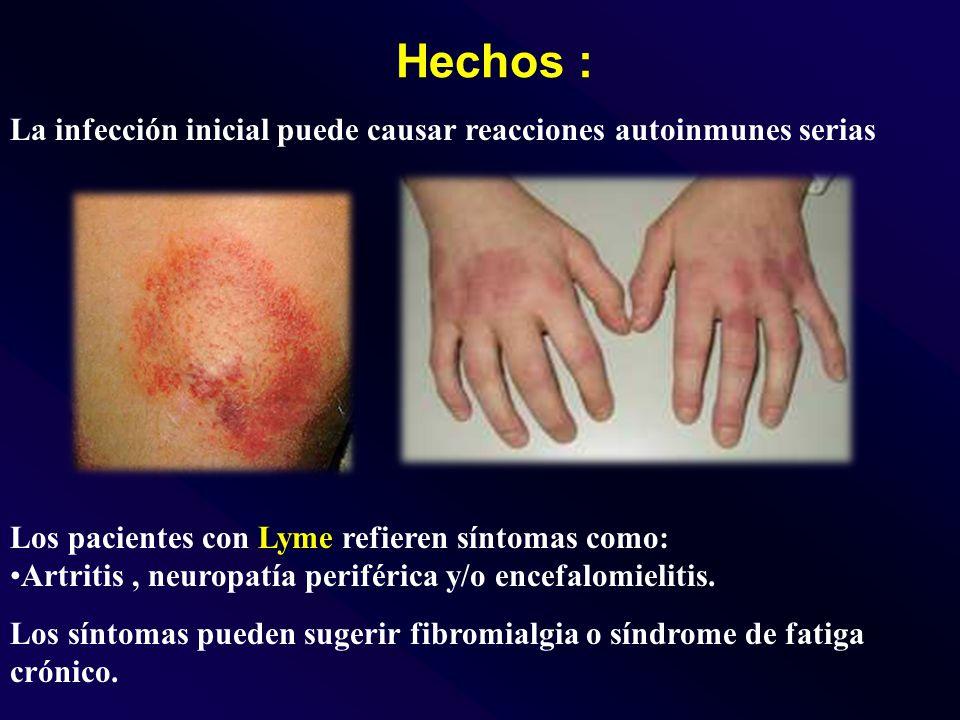 Hechos : La infección inicial puede causar reacciones autoinmunes serias Los pacientes con Lyme refieren síntomas como: Artritis, neuropatía periférica y/o encefalomielitis.
