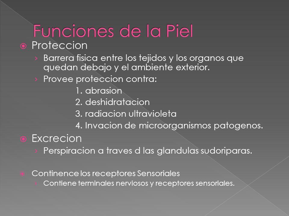  Las pestañas y las cejas protejen al ojo de la luz solar y de las particulas extrañas.