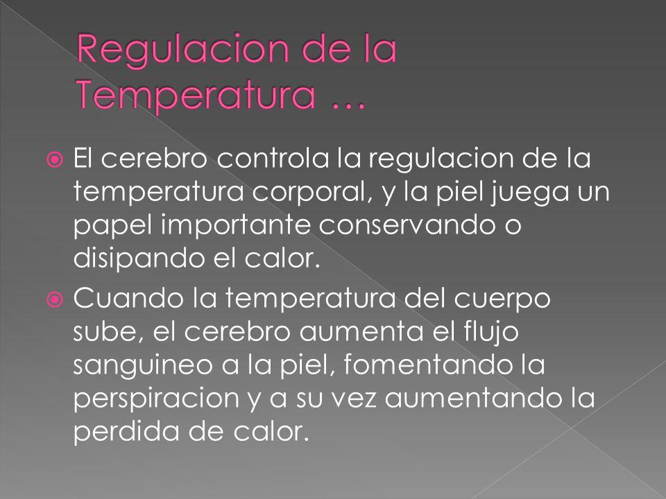  El cerebro controla la regulacion de la temperatura corporal, y la piel juega un papel importante conservando o disipando el calor.  Cuando la temp