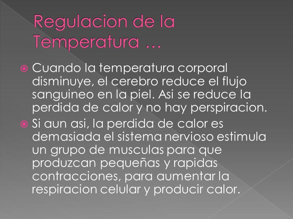  Cuando la temperatura corporal disminuye, el cerebro reduce el flujo sanguineo en la piel. Asi se reduce la perdida de calor y no hay perspiracion.