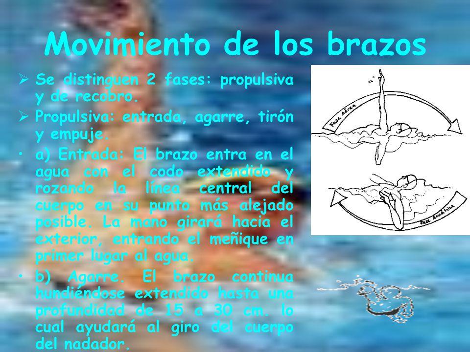 Movimiento de los brazos  Se distinguen 2 fases: propulsiva y de recobro.