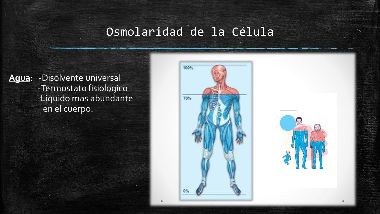 Célula Cl Lípidos Proteínas Mg Medio Extracelular (+) Medio intracelular (-) Na Ca K