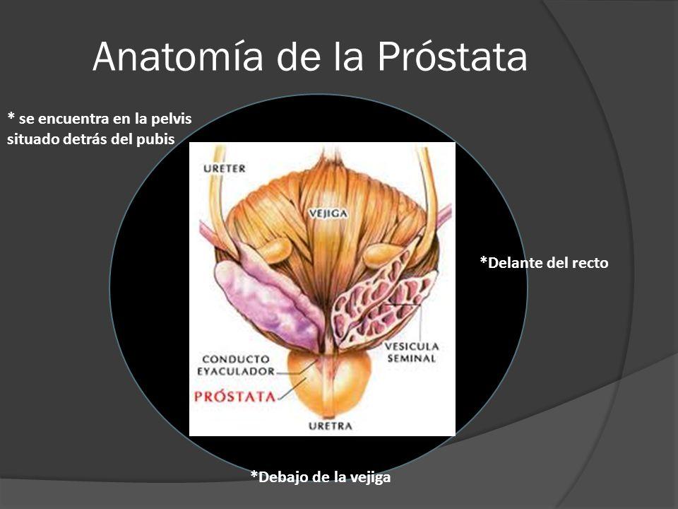 Anatomía de la Próstata * se encuentra en la pelvis situado detrás del pubis *Debajo de la vejiga *Delante del recto