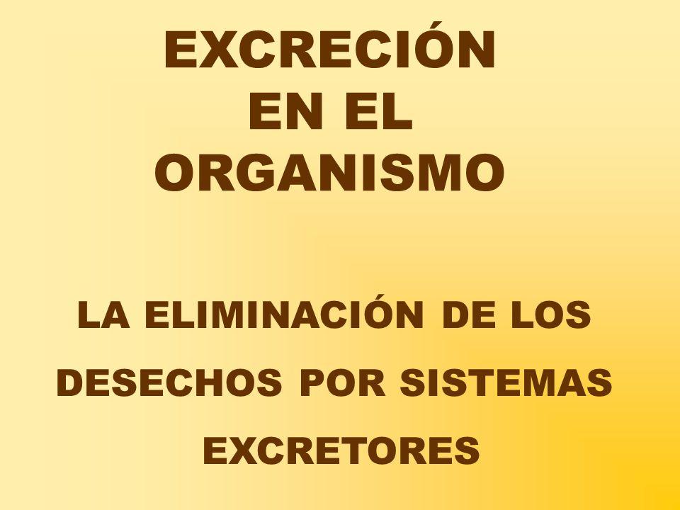 EXCRECIÓN EN EL ORGANISMO LA ELIMINACIÓN DE LOS DESECHOS POR SISTEMAS EXCRETORES
