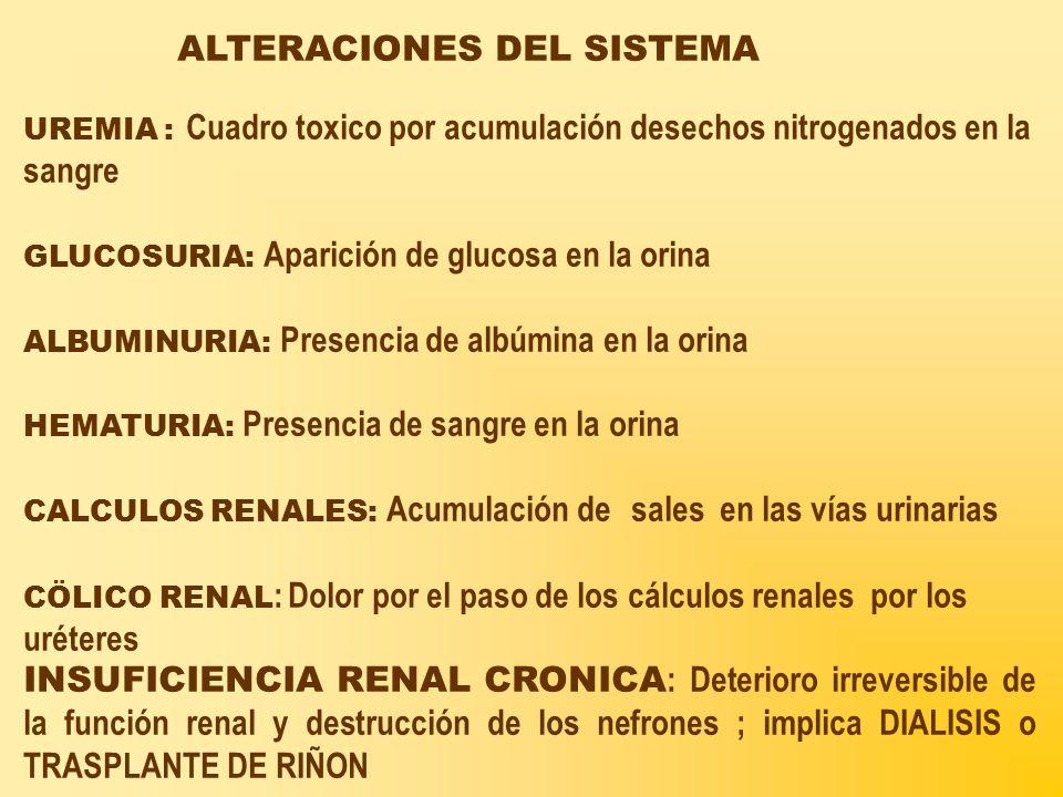 ALTERACIONES DEL SISTEMA UREMIA : Cuadro toxico por acumulación desechos nitrogenados en la sangre GLUCOSURIA: Aparición de glucosa en la orina ALBUMINURIA: Presencia de albúmina en la orina HEMATURIA: Presencia de sangre en la orina CALCULOS RENALES: Acumulación de sales en las vías urinarias CÖLICO RENAL : Dolor por el paso de los cálculos renales por los uréteres INSUFICIENCIA RENAL CRONICA : Deterioro irreversible de la función renal y destrucción de los nefrones ; implica DIALISIS o TRASPLANTE DE RIÑON