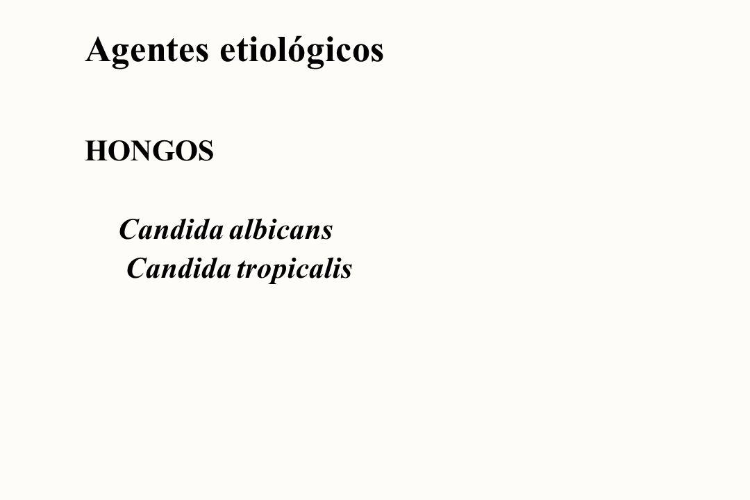 Agentes etiológicos BACTERIAS Neisseria gonorrhoeae Haemophilus ducreyi Treponema pallidum Chlamydia trachomatis Ureaplasma urealyticum Mycoplasma hominis