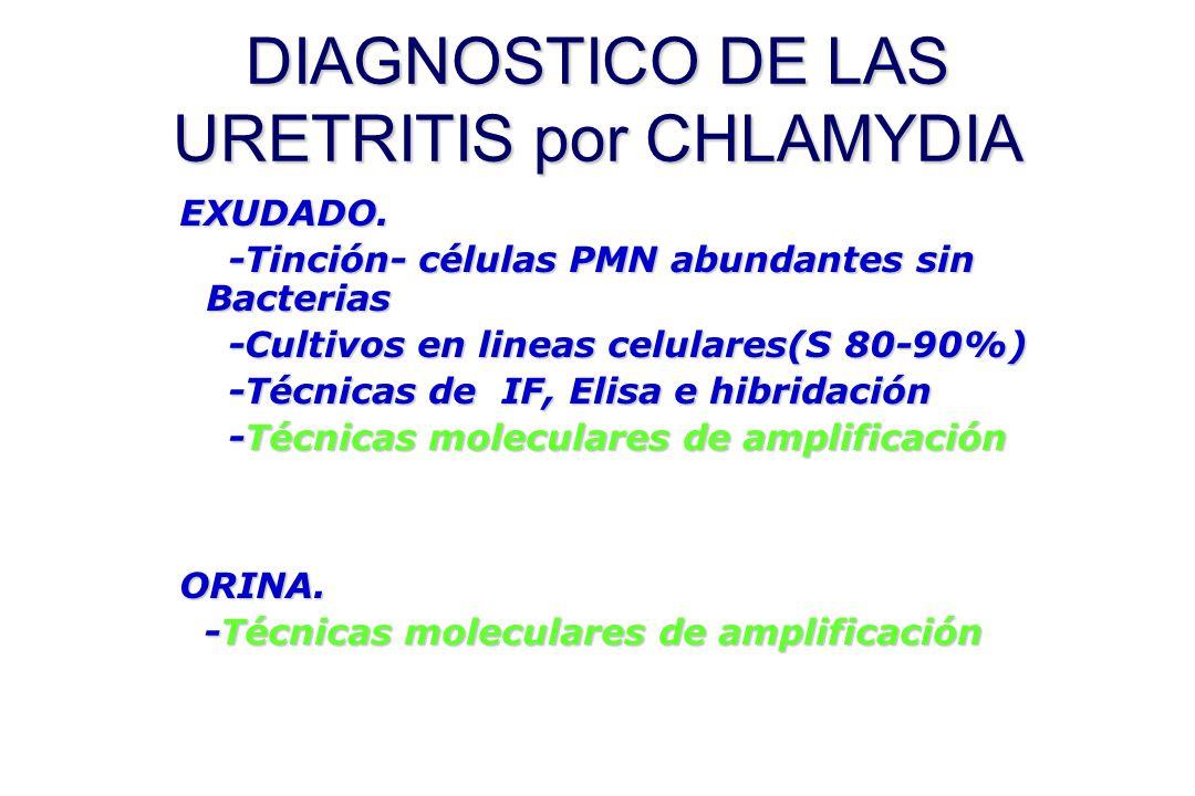DIAGNOSTICO DE LAS URETRITIS por CHLAMYDIA EXUDADO. -Tinción- células PMN abundantes sin Bacterias -Tinción- células PMN abundantes sin Bacterias -Cul