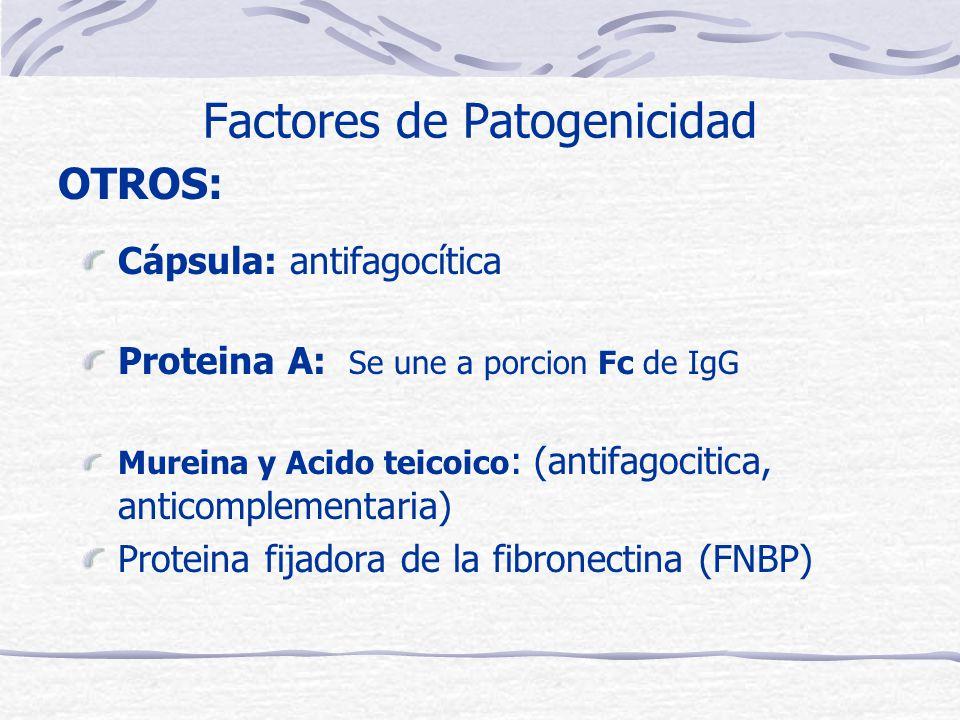 Factores de Patogenicidad Cápsula: antifagocítica Proteina A: Se une a porcion Fc de IgG Mureina y Acido teicoico : (antifagocitica, anticomplementaria) Proteina fijadora de la fibronectina (FNBP) OTROS: