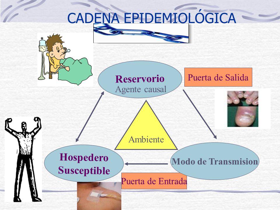 CADENA EPIDEMIOLÓGICA Hospedero Susceptible Reservorio Puerta de Salida Puerta de Entrada Modo de Transmision Agente causal Ambiente