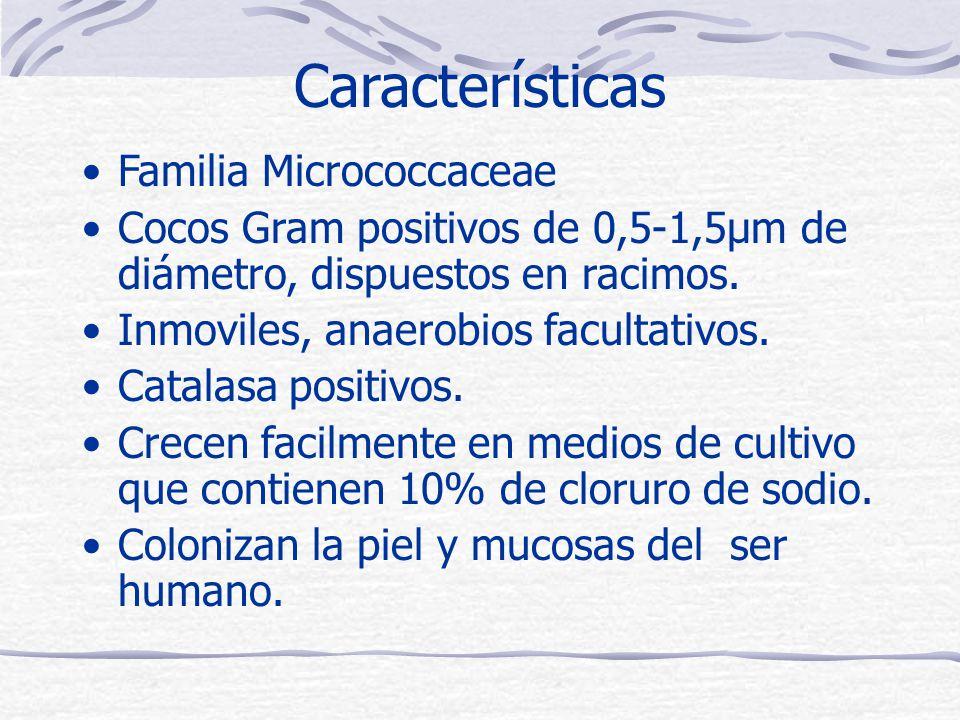 Características Familia Micrococcaceae Cocos Gram positivos de 0,5-1,5μm de diámetro, dispuestos en racimos.