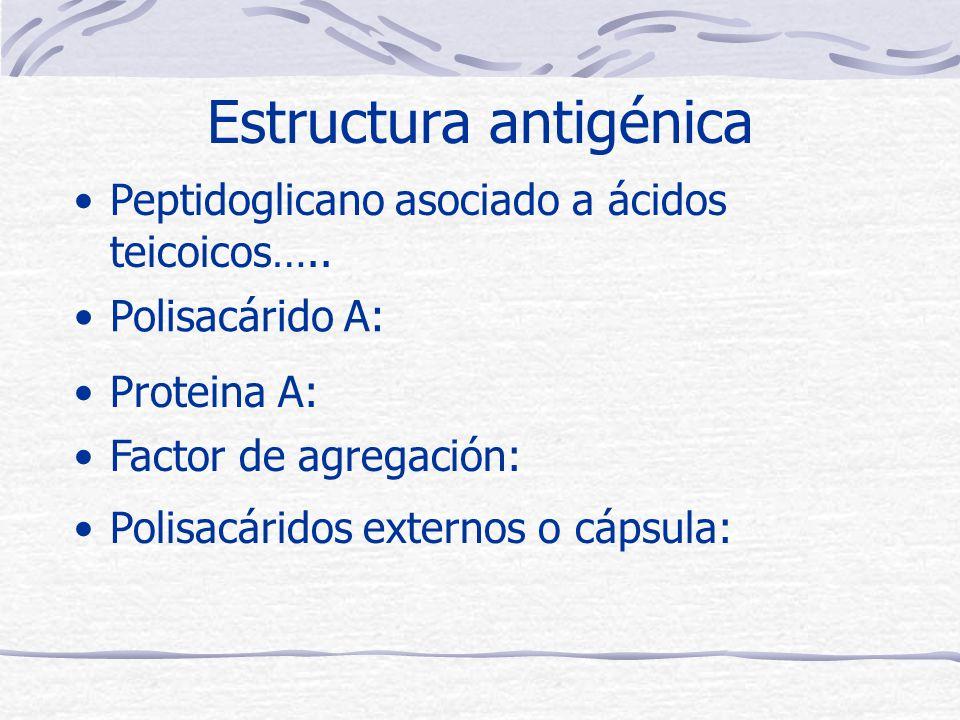 Estructura antigénica Polisacárido A: Proteina A: Factor de agregación: Polisacáridos externos o cápsula: Peptidoglicano asociado a ácidos teicoicos…..