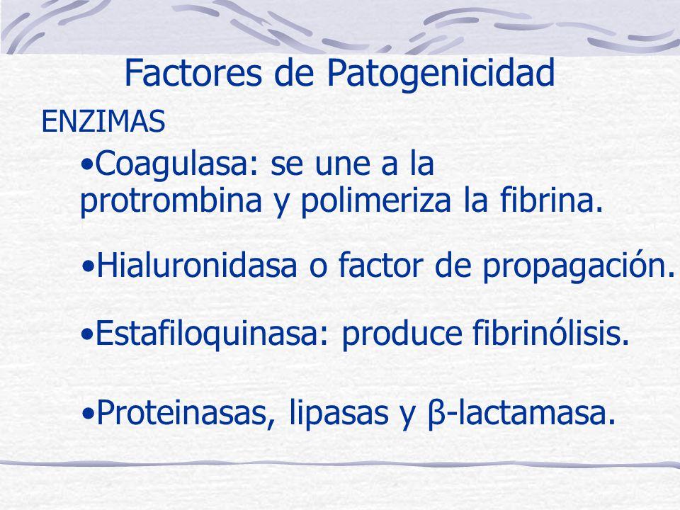 Coagulasa: se une a la protrombina y polimeriza la fibrina.