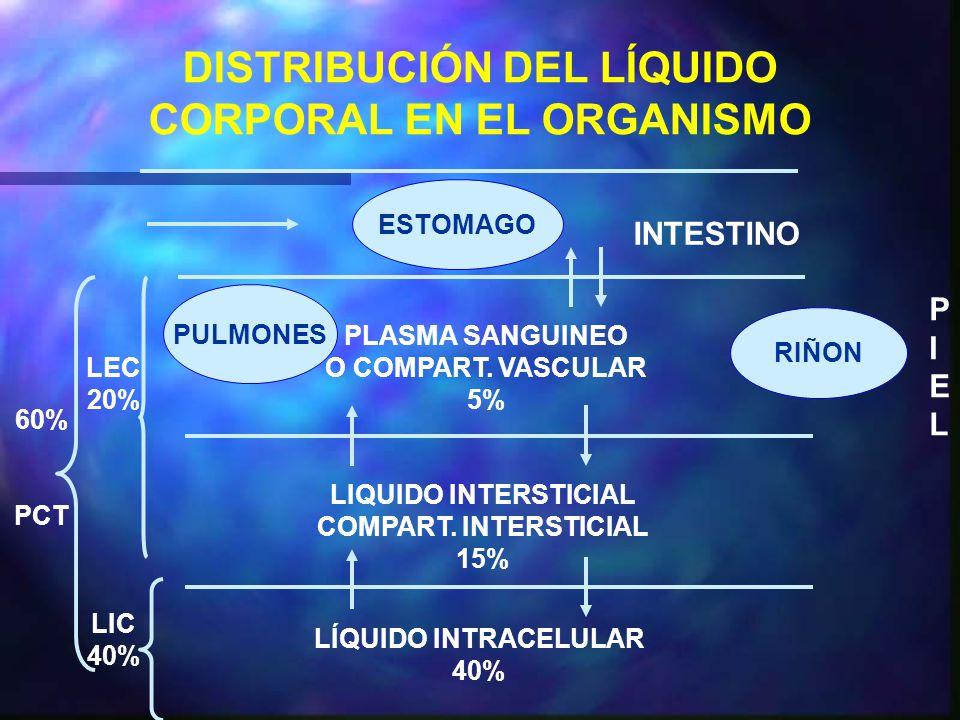 DISTRIBUCIÓN DEL LÍQUIDO CORPORAL EN EL ORGANISMO ESTOMAGO INTESTINO PLASMA SANGUINEO O COMPART.