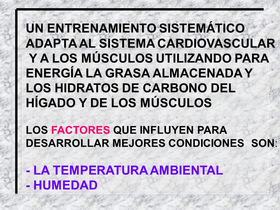 UN ENTRENAMIENTO SISTEMÁTICO ADAPTA AL SISTEMA CARDIOVASCULAR Y A LOS MÚSCULOS UTILIZANDO PARA ENERGÍA LA GRASA ALMACENADA Y LOS HIDRATOS DE CARBONO D