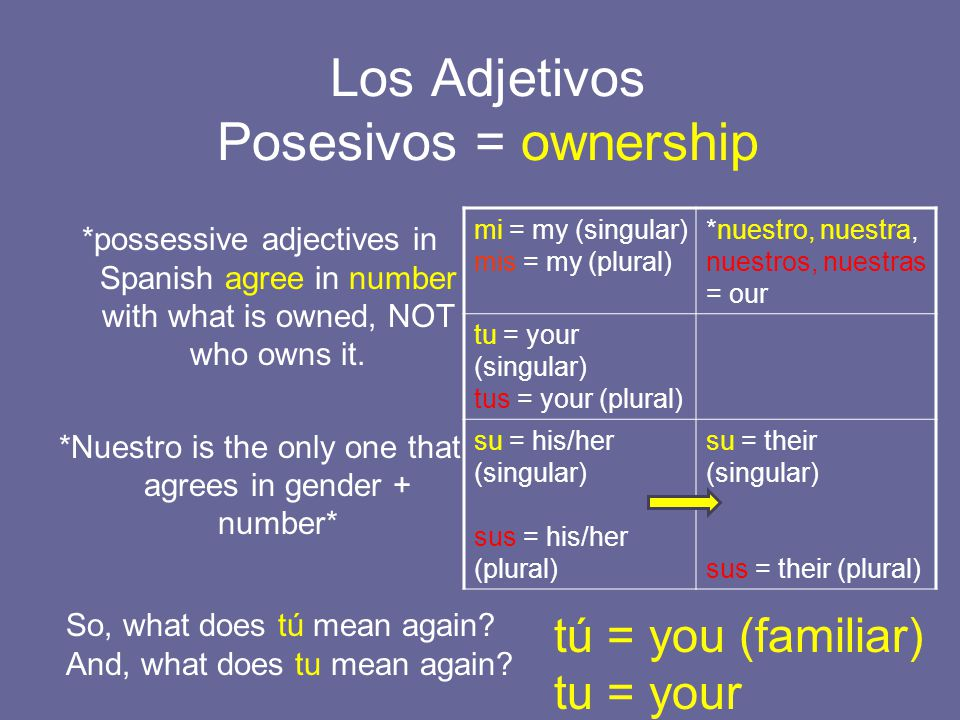 Los Adjetivos Posesivos = ownership *possessive adjectives in Spanish agree in number with what is owned, NOT who owns it.