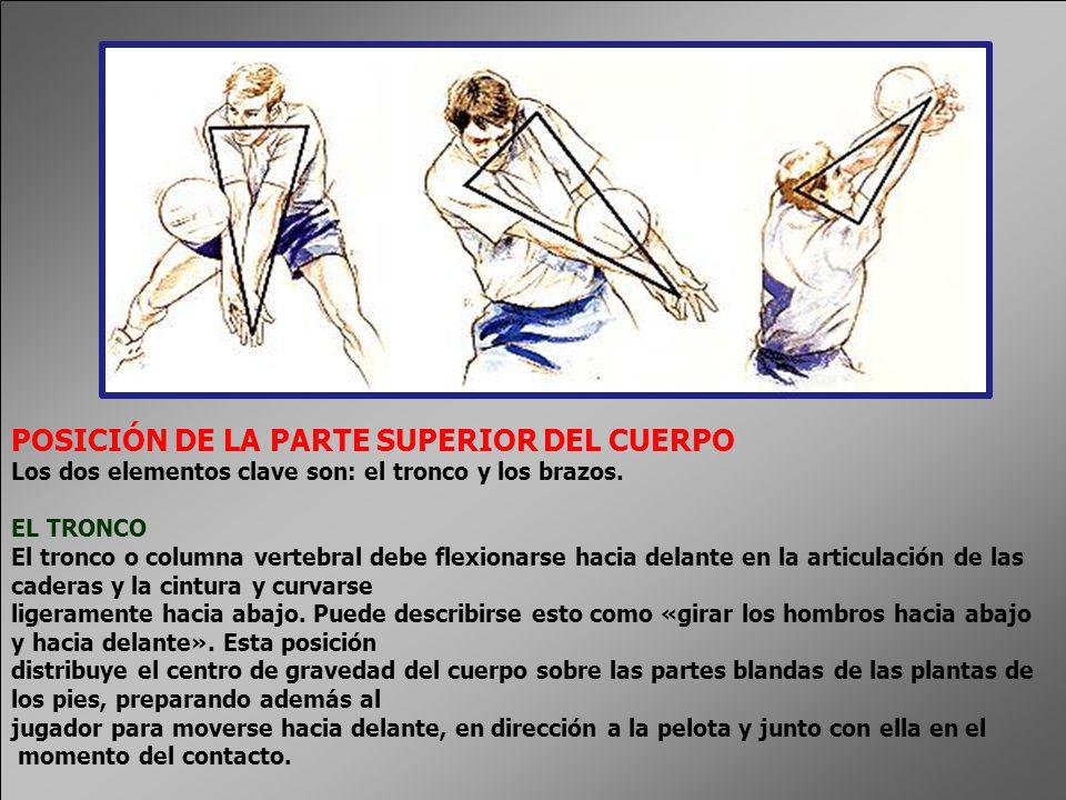 LOS BRAZOS En el momento en que el jugador se prepara para recibir el servicio, los brazos están separados, delante del cuerpo, y ligeramente flexionados en la articulación del codo.