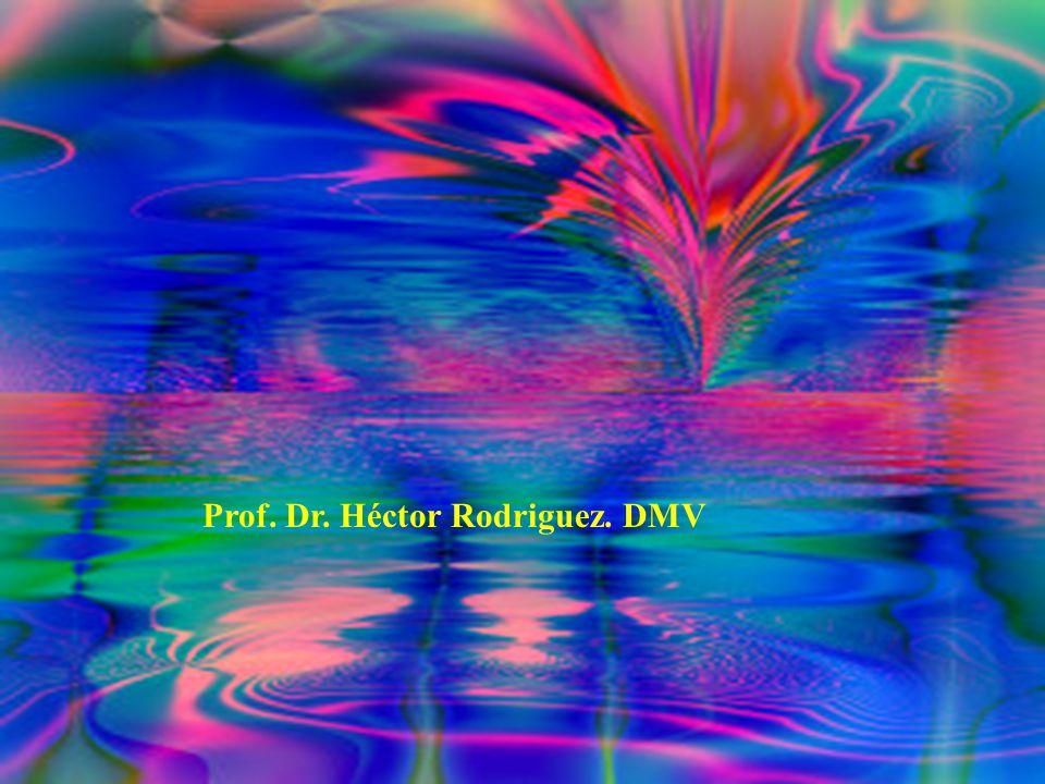 Prof. Dr. Héctor Rodriguez. DMV