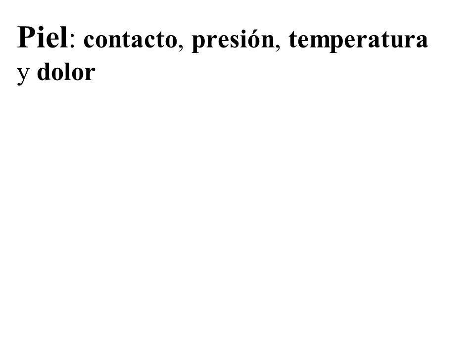 Piel : contacto, presión, temperatura y dolor