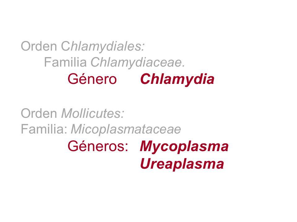 Orden Chlamydiales: Familia Chlamydiaceae. Género Chlamydia Orden Mollicutes: Familia: Micoplasmataceae Géneros:Mycoplasma Ureaplasma