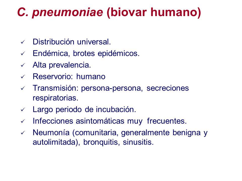 Distribución universal. Endémica, brotes epidémicos. Alta prevalencia. Reservorio: humano Transmisión: persona-persona, secreciones respiratorias. Lar