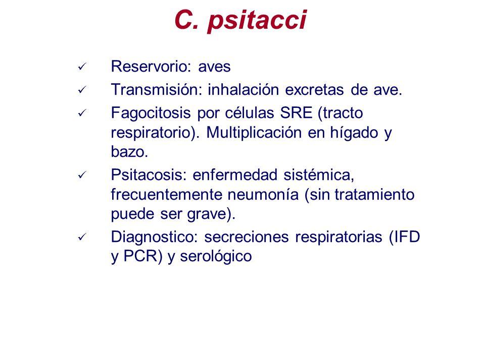 Reservorio: aves Transmisión: inhalación excretas de ave. Fagocitosis por células SRE (tracto respiratorio). Multiplicación en hígado y bazo. Psitacos