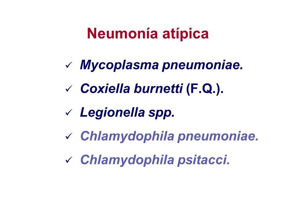 Mycoplasma pneumoniae. Coxiella burnetti (F.Q.). Legionella spp. Chlamydophila pneumoniae. Chlamydophila psitacci. Neumonía atípica