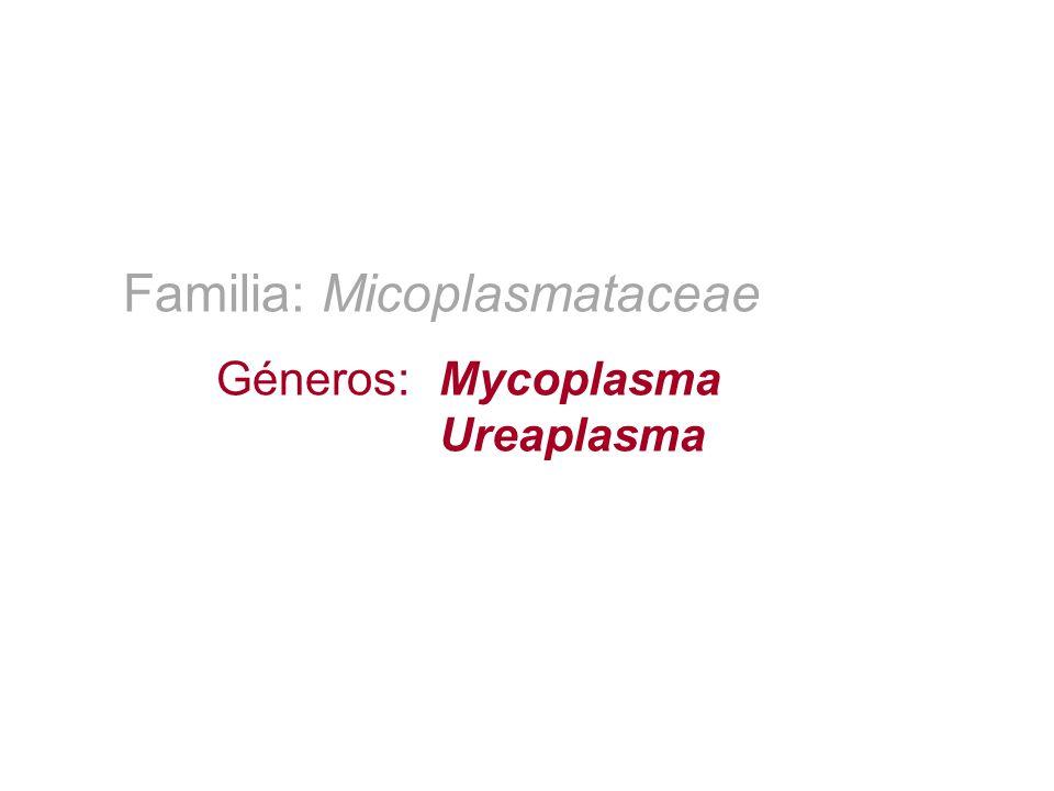 Familia: Micoplasmataceae Géneros:Mycoplasma Ureaplasma
