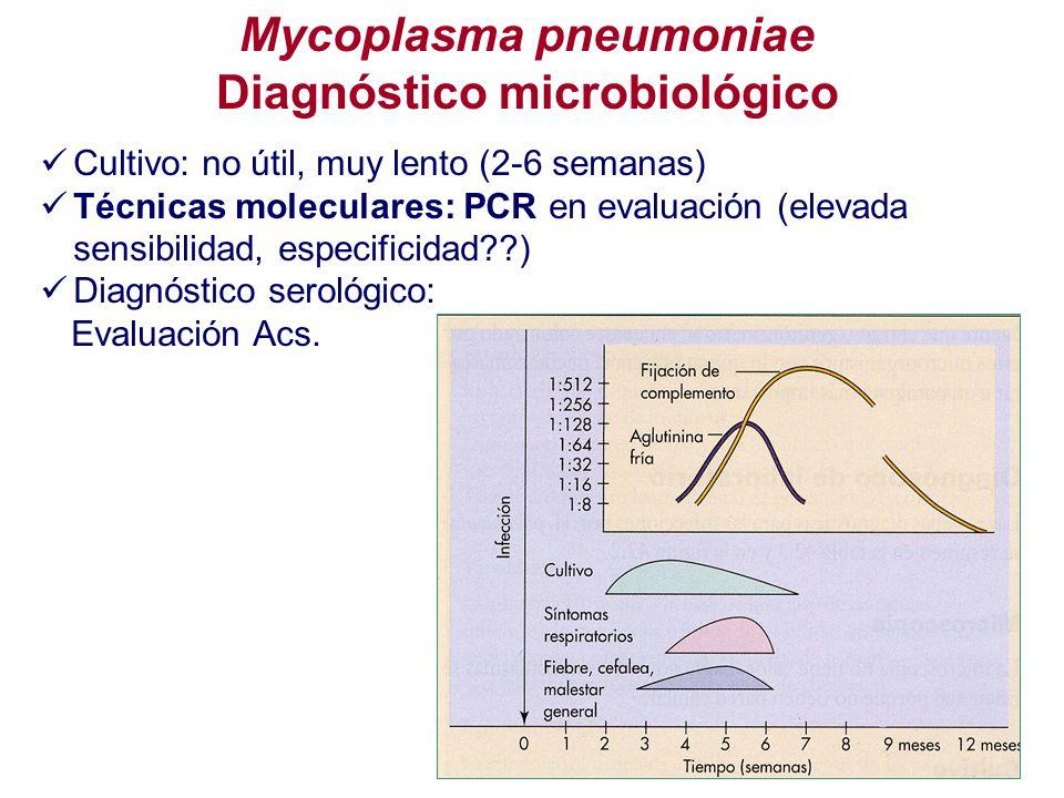 Diagnóstico microbiológico Cultivo: no útil, muy lento (2-6 semanas) Técnicas moleculares: PCR en evaluación (elevada sensibilidad, especificidad??) D