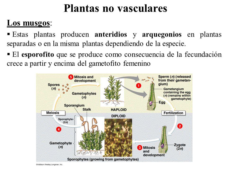 Musgos y plantas vasculares  fondos descarga gratuita, fotos hermosas