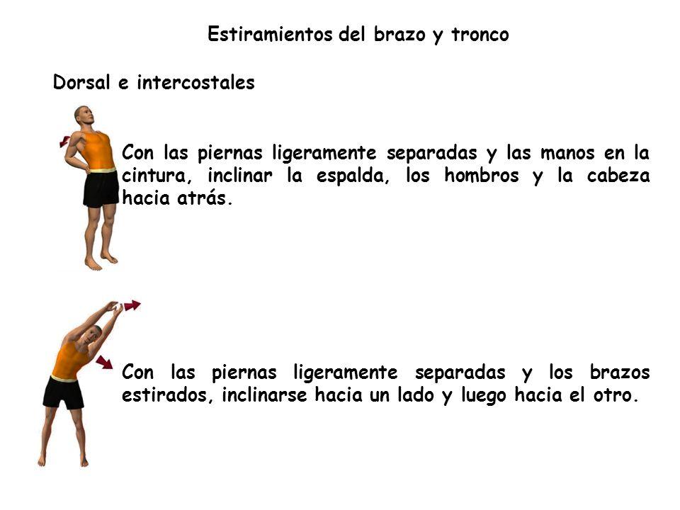 Dorsal e intercostales Con las piernas ligeramente separadas y las manos en la cintura, inclinar la espalda, los hombros y la cabeza hacia atrás.