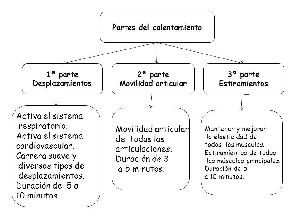 Partes del calentamiento 1ª parte Desplazamientos 2ª parte Movilidad articular 3ª parte Estiramientos Movilidad articular de todas las articulaciones.