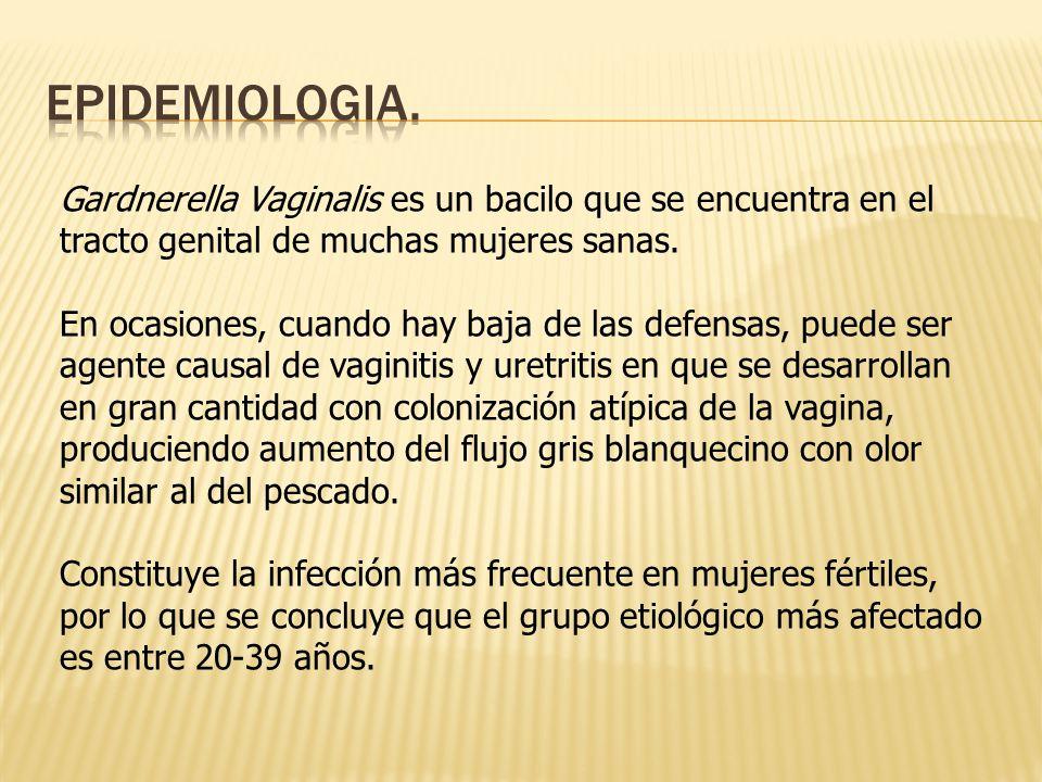 Gardnerella Vaginalis es un bacilo que se encuentra en el tracto genital de muchas mujeres sanas.