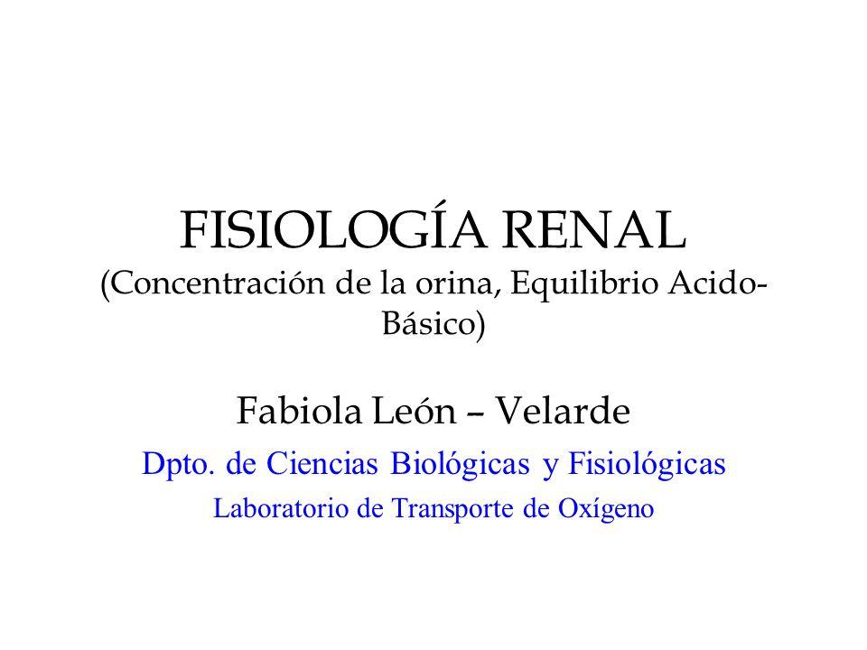 FISIOLOGÍA RENAL (Concentración de la orina, Equilibrio Acido- Básico) Fabiola León – Velarde Dpto.
