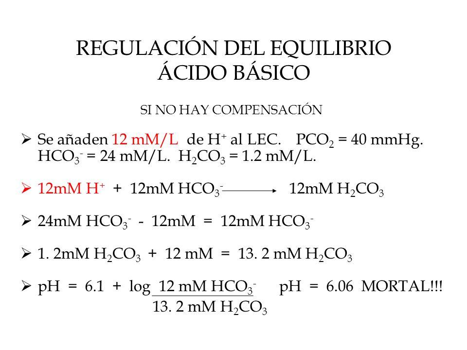 REGULACIÓN DEL EQUILIBRIO ÁCIDO BÁSICO SI NO HAY COMPENSACIÓN  Se añaden 12 mM/L de H + al LEC.