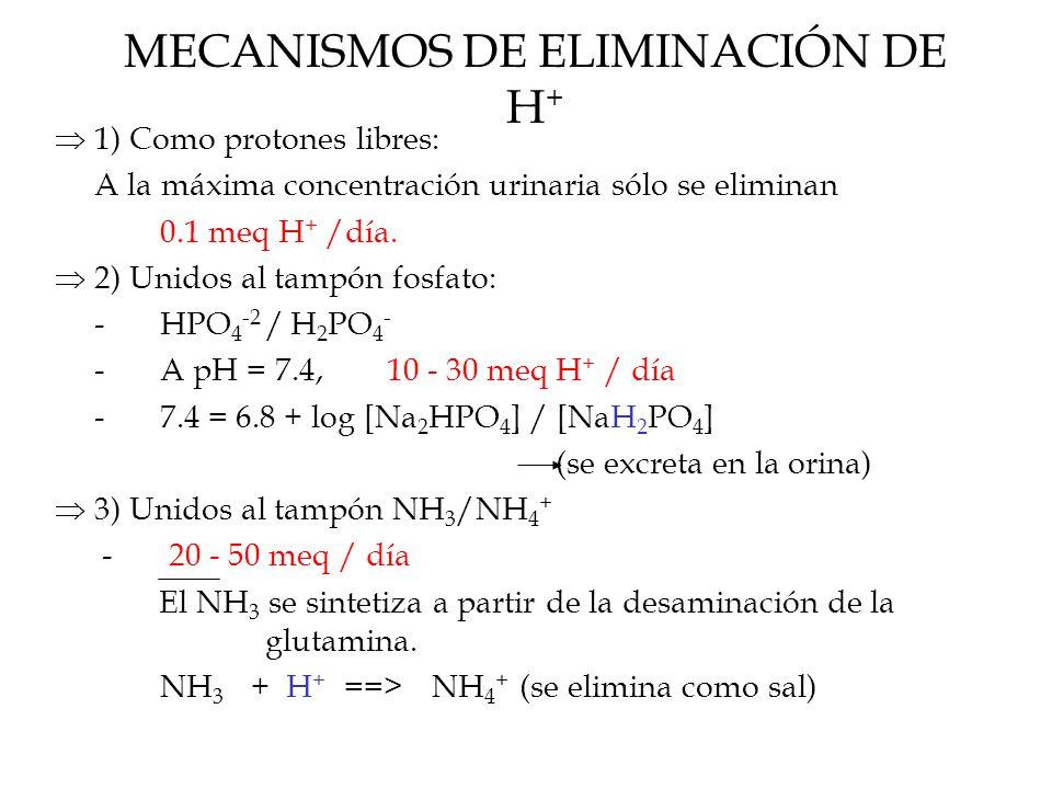 MECANISMOS DE ELIMINACIÓN DE H +  1) Como protones libres: A la máxima concentración urinaria sólo se eliminan 0.1 meq H + /día.